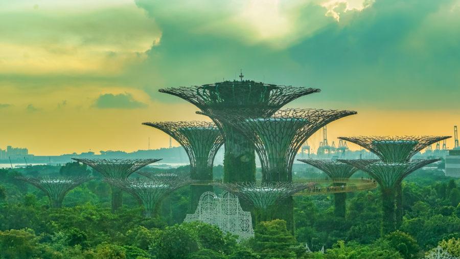 Urban Mushrooms