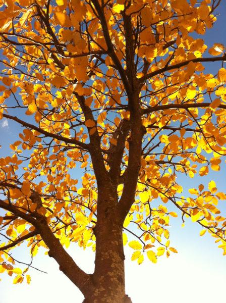 Tree meets sunlight