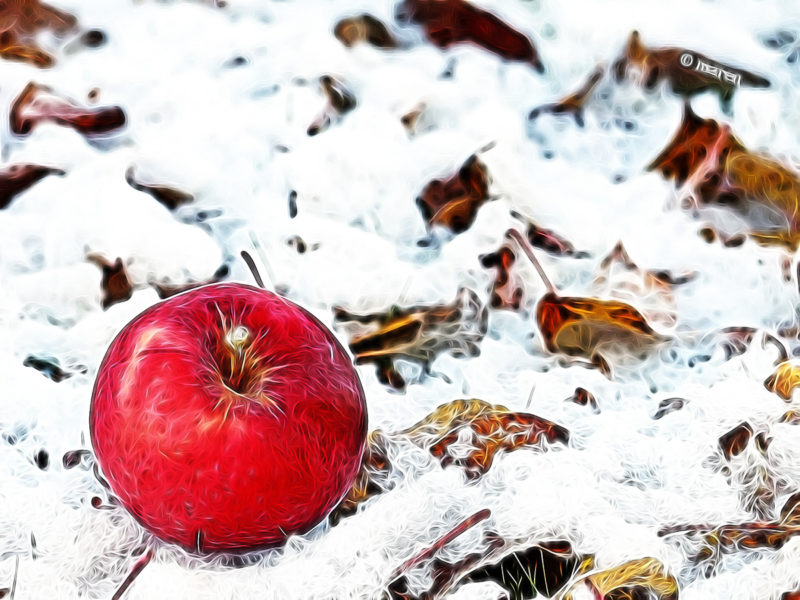 Winter apple