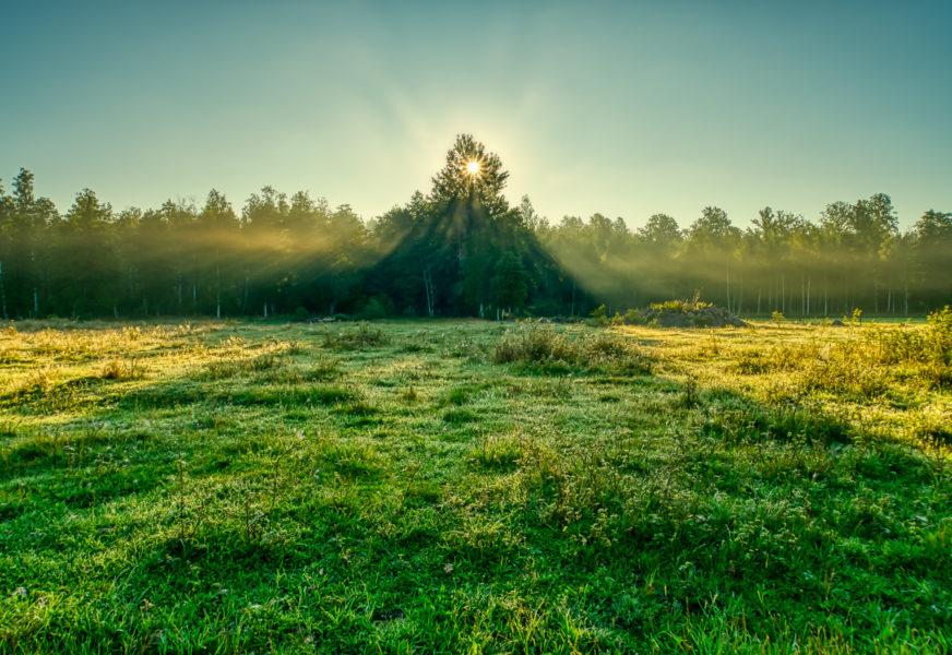 Morning sun & morning mist