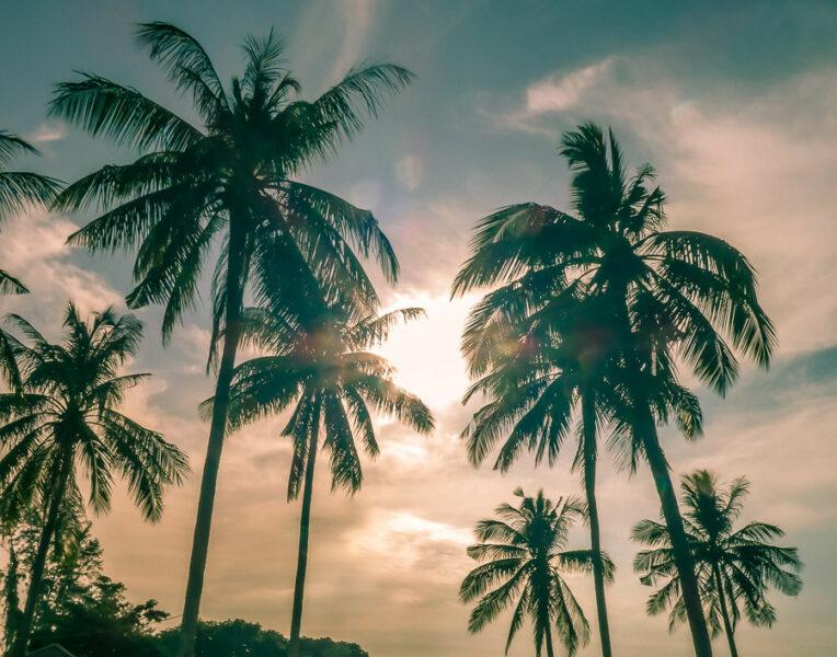 Palmtrees in the sun